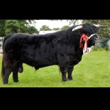 Uallach Dubh 5th of Pollok NEP070275 (UK)