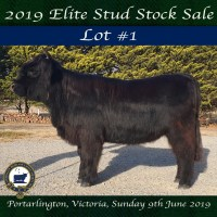 2019 National Show SALE LOT #1