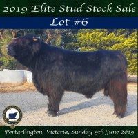 2019 National Show SALE LOT #6