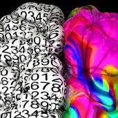 B-Q MINDED Summer School: an intensive, multidisciplinary course on Quantitative MRI