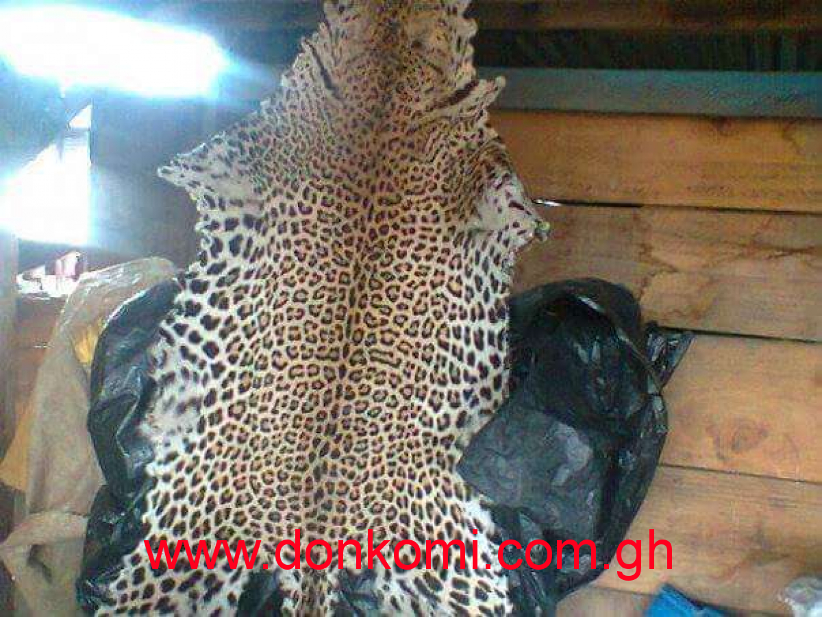 Tiger and lion skins for sale at affordable price