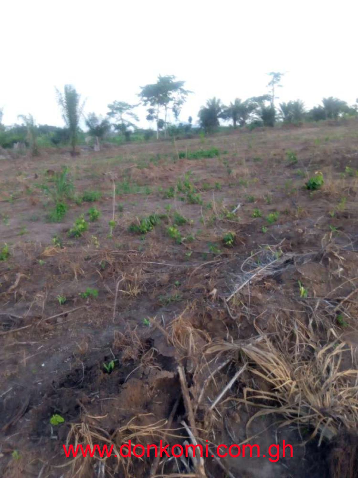 Farm land Long Lease Volta Sogakope