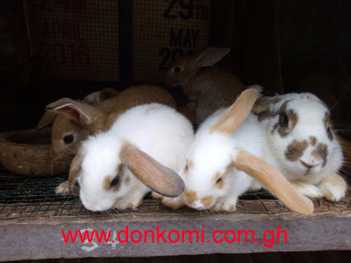 Live and dressed rabbits for sale
