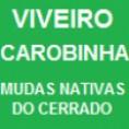 CERRADO: VIVEIRO DE MUDAS NATIVAS
