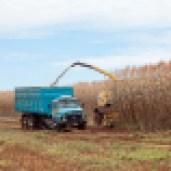 Sorgo Etanol é aliado dos agricultores no período de La Niña