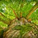 Técnico Florestal buscando oportunidade