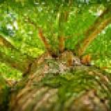Técnico Florestal/Gestão Ambiental