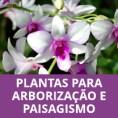PLANTAS PARA ARBORIZAÇÃO E PAISAGISMO