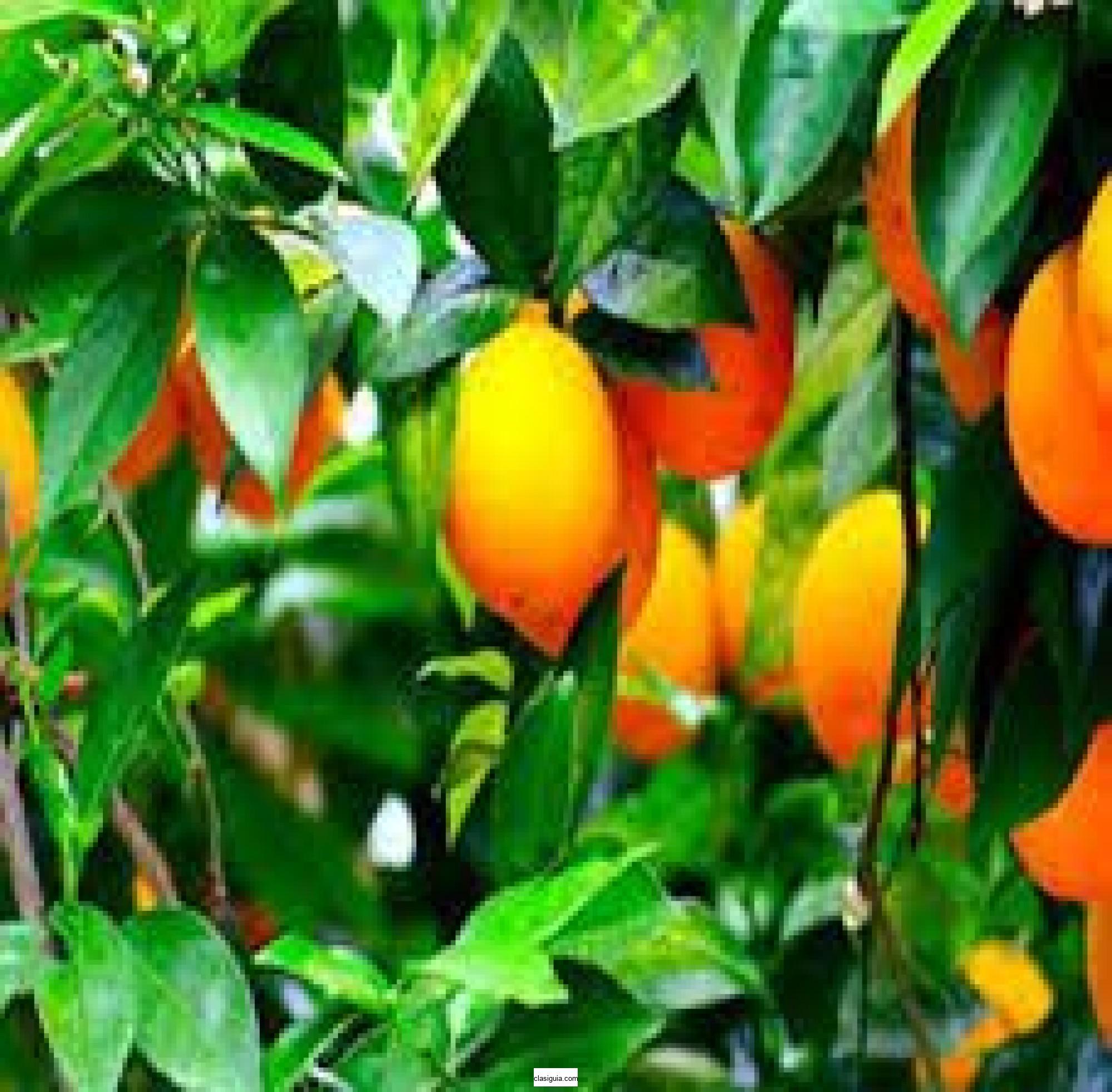 Venta de terreno frutal, San Julián