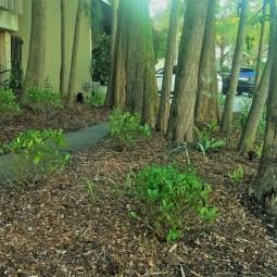 Double Bay Botanic Gardens