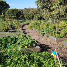 Rose Bay Community Garden