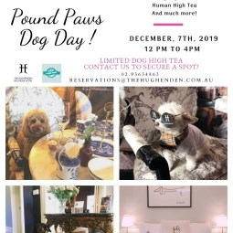 Pound Paws Dog Day at The Hughenden Boutique Hotel