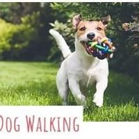 Sassy Tails - Pet Sitting & Dog Walking