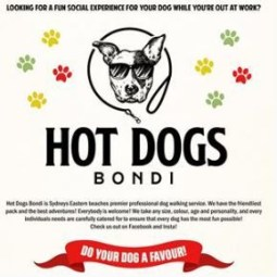 Hot Dogs Bondi - Dog Care & MInding