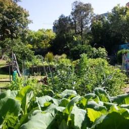 Urban Gardening Waverley