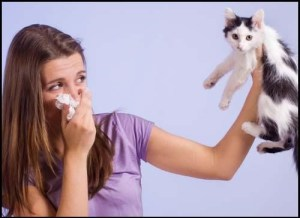 allergy-cat