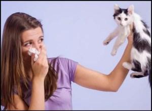 allergy-cat