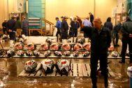 Auctioning the tuna