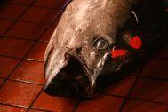 Giant tuna head