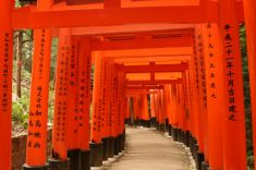 the Torii at Fushimi Inari Shrine