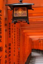 Lantern in the Torii