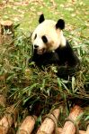 ChengDu 159