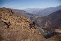 Colca-Canyon-13