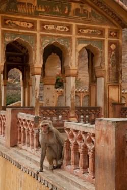 Jaipur-68