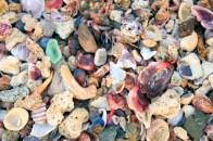CR Shells
