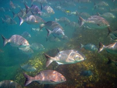 December 2, 2012: Fish!