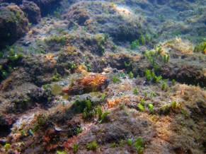 December 3, 2012: Puffer Fish