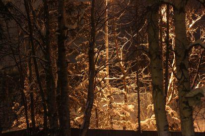 Januaey 18, 2013: Birches at Night