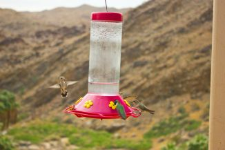 May 5, 2013: Humming Bird Feeder