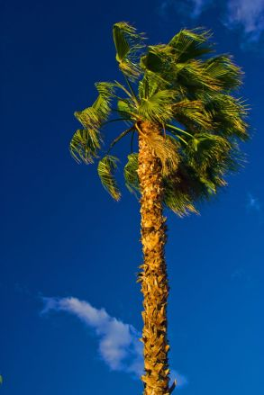 May 6, 2013: Palm Tree at Sunset