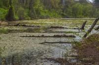 Apr-30_turtles-pond-view-1-2