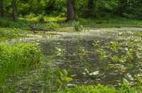 The pond's edge