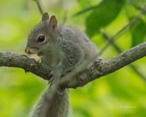 Jun-1_squirrel-1-6