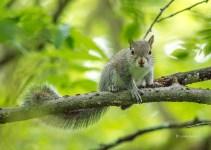 Jun-1_squirrel-1