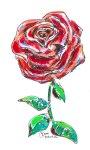 Red Rose 5x8 / 2008