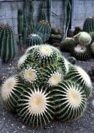 Beppu-Cactus