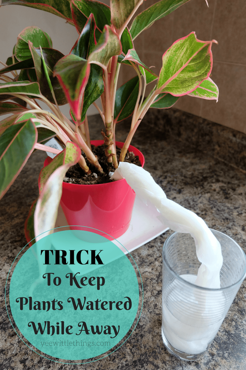 Trick to keep plants watered while away yee wittle things for Plant waterer