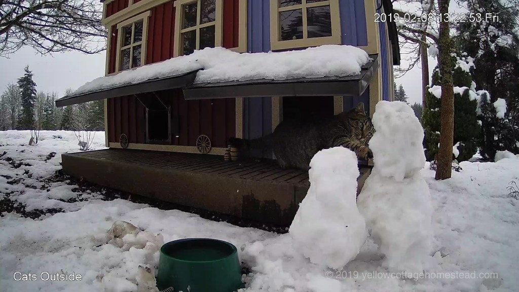 Cat poking snowman