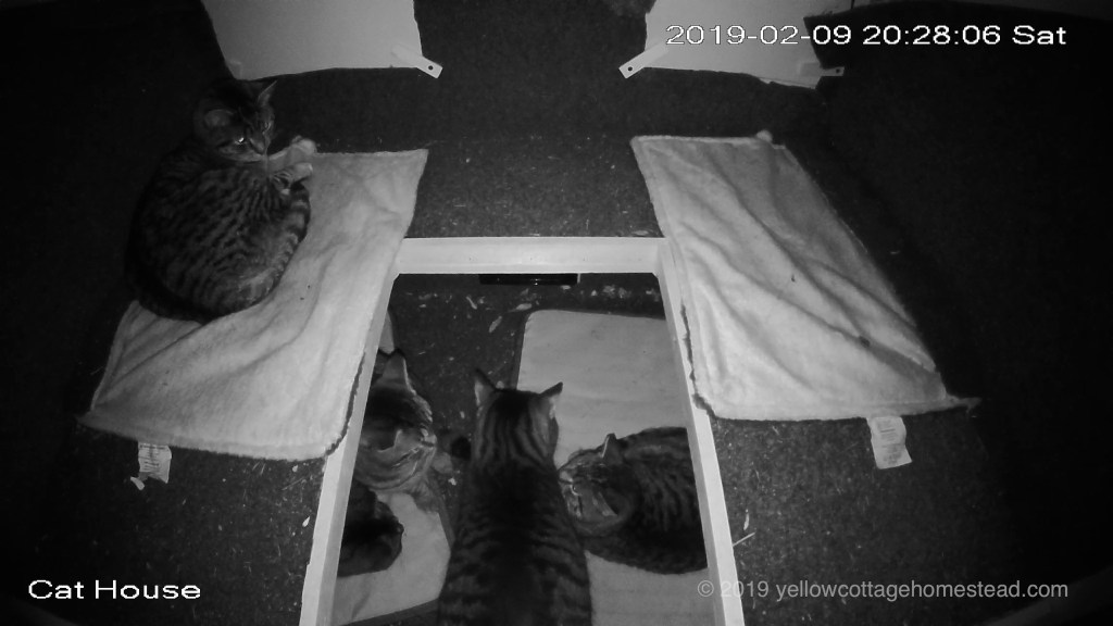 All five cats inside shelter