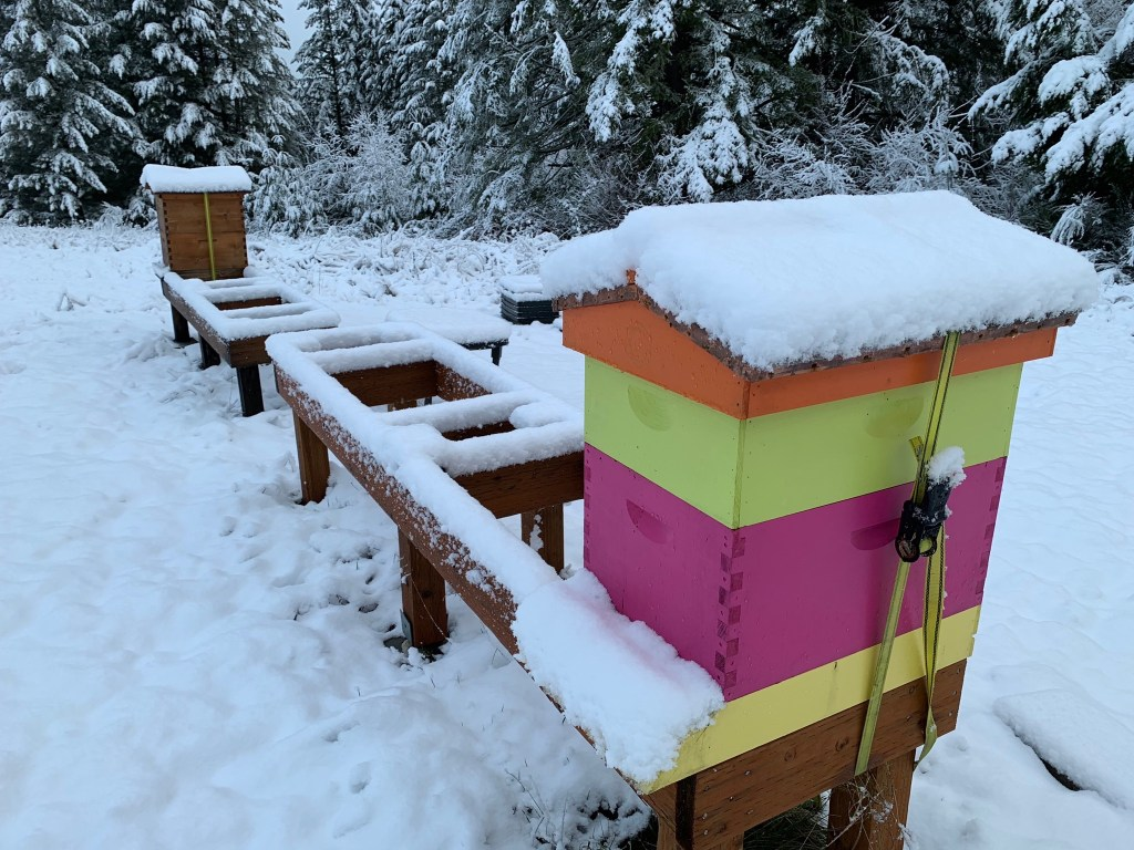 Beehives with snow