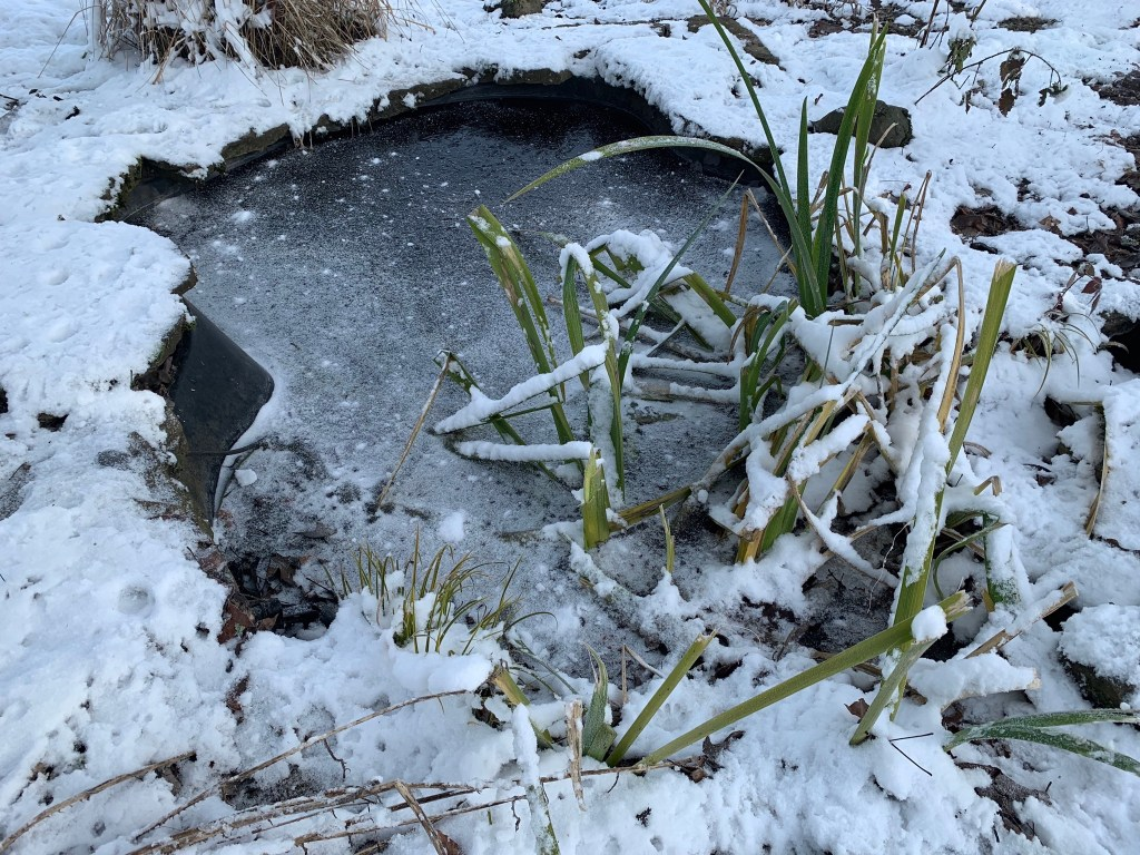 Frozen small pond