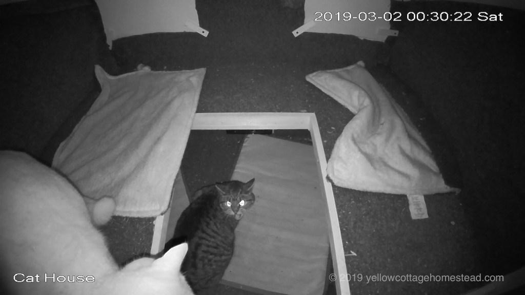 Orange cat encounter