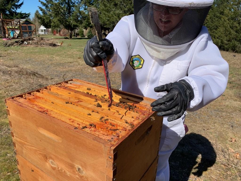 Jenn inspecting hive
