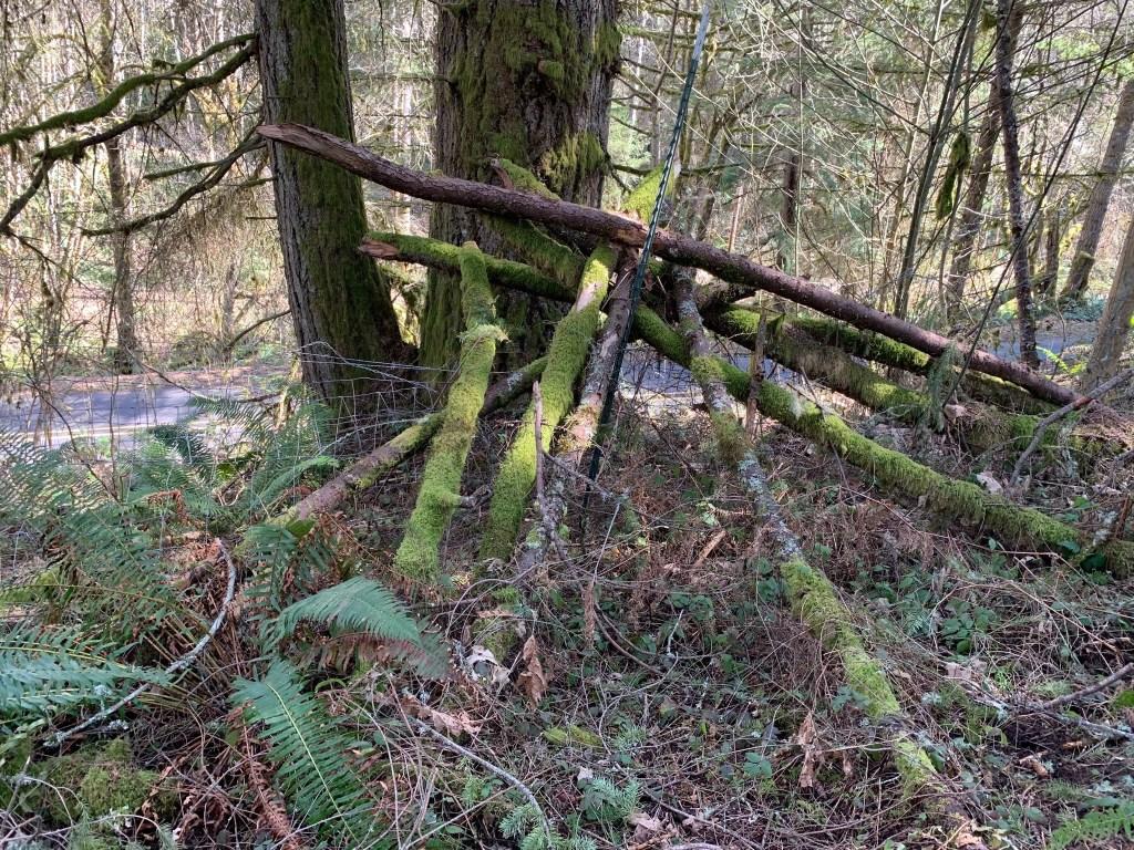 Fallen tree limbs