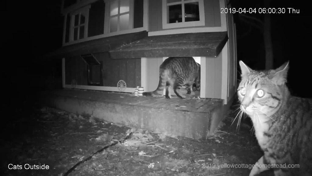 Cats outside