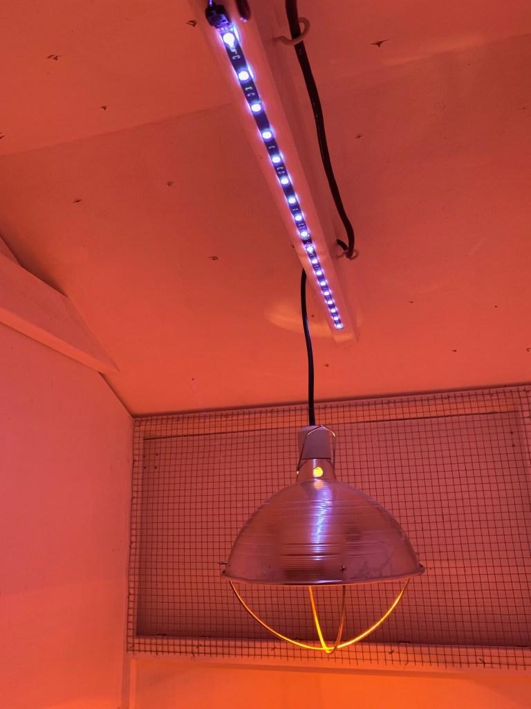 LED lighting & heat lamp